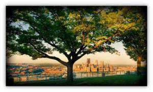 Tree overlooking Pittsburgh