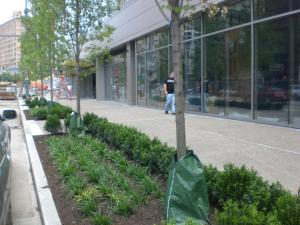 Trees and foliage planted in downtown Pittsburgh help to absorb rain water during a storm before it enters the sewer system. (Picture Source: Clean Rivers Campaign in Pittsburgh)