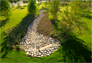An example of a Rain Garden (picture source: forbes.com)