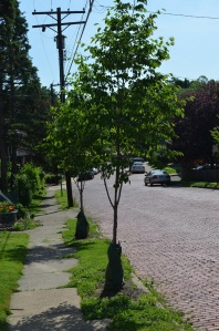 A few of the street trees that tour participants learned about.