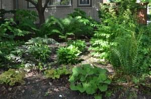 A great shot of Janis' beautiful rain garden!